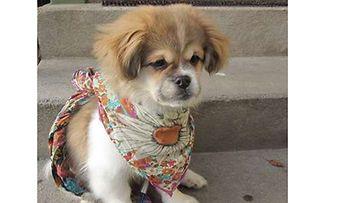 """Lili-koira: """"Lili kaunokainen!"""" Kuva: Auni Rissanen"""