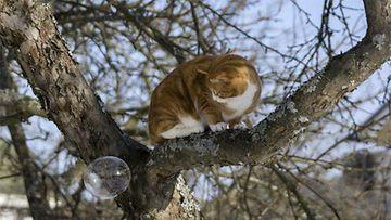 Jaska-kissa: Saippuakuplan saalistaja. Kuva: Jasmin Numminen