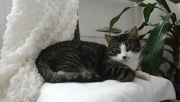 Valtsu-kissa. Kuva: Jenni Kosunen