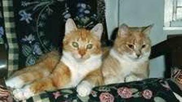 Otto ja Alli: kuvan Otto (taaempi)1995-2010 ja etualan Alli 1996- edelleen hyvässä kunnossa Amèliin (3) ja Armaksen (2) kaverina =) Kuva: Pirkko Rantanen