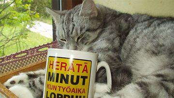 """16-vuotias Niksu-kissa: """"Kotikissan rasittava elämä. """" Kuva: Marja Saari"""