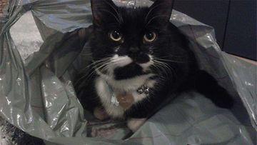 Tiuhti-kissa: Muovipussissa on hyvä olla. Kuva: Piia Kukkonen