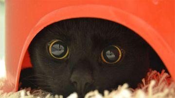 """Igor-kissa: """"Igor 6kk, meidän rakas täystuho joka leikkii öisin tuolla punaisella potalla ^^"""" Kuva: Heidi Tuomala"""