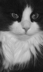"Remu-kissa: ""Remukatti poseeraa."" Kuva: Satu Rojola"