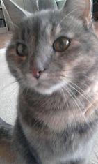 """Lyyli-kissa: """"Hetkonen.... Mitä mää olinkaan tekemässä...? Noin miettii Lyyli-kissa."""" Kuva: Henna Ketola"""