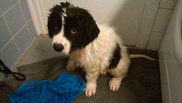 """Bobby-koira: """"Bobby tuli sateesta."""" Kuva: Jose Martin"""
