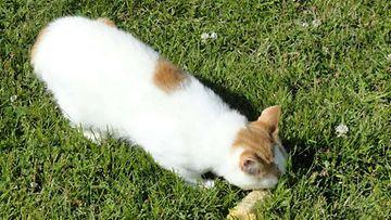 """Pilvi-kissa: """"Kesän grillausmuistot lämmittää."""" Kuva: Marjo Kannisto"""