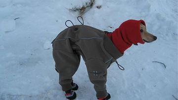 """Nata-koira: """"Jo saisi pakkaset hellittää !"""" Kuva: A. Vainiotalo"""