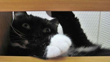 Myrtti-kissa. Kuva: Riina Järvenpää