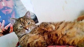 """Misu-kissa: """"Hellyyden kipeä pikku neiti, pelastettu pentutehtailijalta."""" Kuva: Saila Raatikainen"""