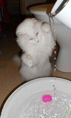 """Lumi-kissa: """"Lumin vesileikit."""" Kuva: Heidi Willman"""