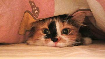 """Lyyti-kissa: """"Lyyti meni seikkailemaan juuri pedatun sängyn peiton alle!"""" Kuva: Heli Kosunen"""