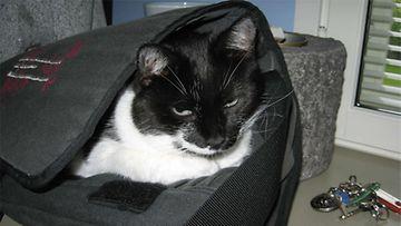 """Mauno-kissa: """"Et sitten unohda ottaa mukaan.."""" Kuva: Riitta Hovi"""