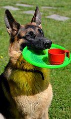 """Viivi-koira: """"Juhannuksen oma hovikoira :) Tarjoilee juotavat kuin juotavat kylmänä!"""" Kuva: Anne Turpeinen"""