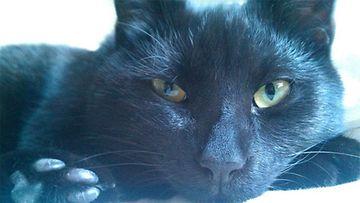 """Raksu-kissa: """"kirjaimellisesti täystuho :) """" Kuva: Maiju Kiss"""
