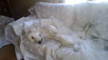 """Lili-koira: """"Lomatunnelmissa ;)"""" Kuva: Kirsti Ketonen"""