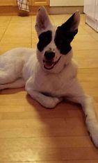 Dali-koira. Kuva: Kirsi Hirvasniemi