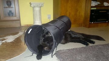 """Musti-kissa: """"Tunnelitunnelmaa."""" Kuva: Mari Rantanen"""