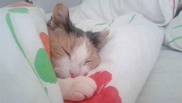 Guldemar-kissa: Pikku sankari päiväunilla <3 Kuva: Tiia Virtanen