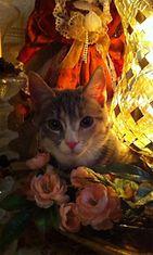Roosa-kissa. Kuva: Kim Ruotanen