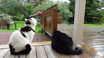 Nöpö ja Muru sadetta pitämässä. Kuva: Seppo Aaltonen