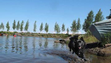 """Vilma-koira: """"Kesä."""" Kuva: Hannu Gummerus"""