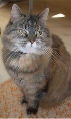 Roosa-kissa: Roosa on maailman kaunein ja kiltein <3 Täytti juuri 13v :) Kuva: Meri Lehtiö