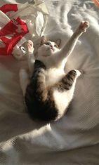 """Sissi-kissa: """"Leikkiminen on kivaa."""" Kuva: Kirsi Eronen"""