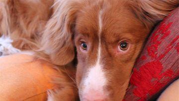 """Luca-koira: """"Meidän rakas Tolleri Tollukka.. Aivan sympaattinen kaveri... joka käy vähän hitailla"""" Kuva: Tomi Toivonen"""