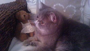 Sauli-kissa. Kuva: Satu Horttanainen