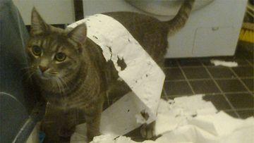 Väinö-kissa. Kuva: Enni Tuppurainen