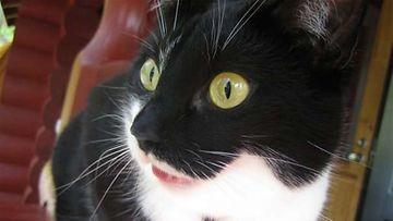"""Maisa-kissa: """"Mökillä ollessaan Maisa tähystelee lintuja."""" Kuva: Sofia Sutskov"""