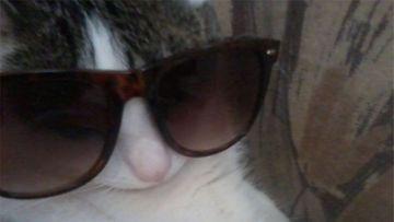 """Nöpö-kissa: """"Aurinkoa odotellessa."""" Kuva: Kirsi Karenius"""