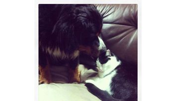 """Kyösti-koira (ja Eetu-kissa): """"Jotain voimme taas oppia eläimiltä: Ystävyys on ikuista ja rakkaus ei tunne rajoja."""" Kuva: Terhi Leppänen"""