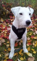 """Tico-koira: """"jack russell terrier <3 """" Kuva: Julia Hautala"""