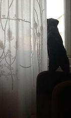 """Mimo-koira: """"Mimo on kaupungin pahin kyylä."""" Kuva: Anni Pesonen"""