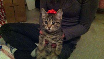 """Viivi-kissa: """"meän pieni joululahja :)"""" Kuva: Elina Puolakko"""