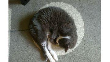 """Olli-kissa: """"Olli 20 v. melkein kuutamolla."""" Kuva: Mirja Stolt"""