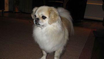 Blondi-koira Kuva: Mari-Anne Jalli