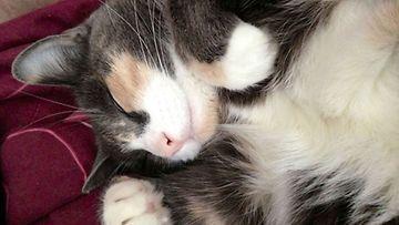 """Lyyli-kissa: """"Kauniita Unia <3 """" Kuva: Sonja Nurhinen"""