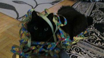 """Pepe-kissa: """"Kohta 2 vuotias juhannusvauva Pepe vapputunnelmissa"""" Kuva: Jonna O"""