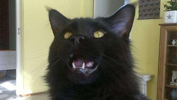 """Musti-kissa:""""Mustia naurattaa :o)"""" Kuva: Mari Rantanen"""