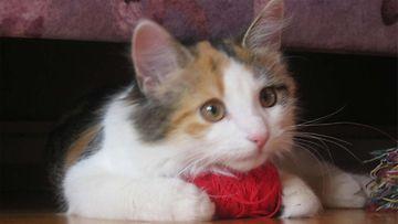Bella-kissa. Kuva: Sonja Kinanen