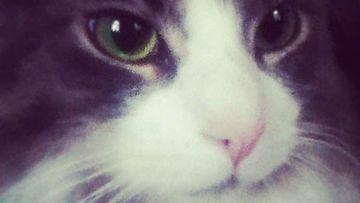 """Pulga-kissa: """"Äärimmäisen sivistynyt kissaeläin."""" Kuva: Paula Mattila"""