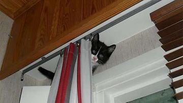 """Chili-kissa: """"Anna mun olla rauhassa... Kotiuduin vasta eilen!"""" Kuva: Iina-Maaria Prinkkala"""