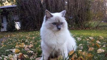 "Emma-kissa: ""Emman ensimmäinen syksy."" Kuva: Nina Varjonen"
