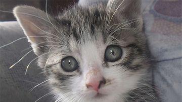 Jytky-kissa: Räyhh! Pieni pelottava pantteri. Kuva: Niina Luoto