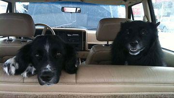 """Koirat Rockie & Techno: """"Bestikset aina valmiita matkalle!"""" Kuva: Anu Nauha"""