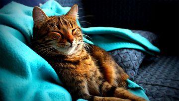 Lilli-kissa. Kuva: Susanna Raassina