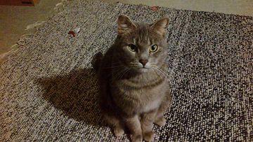 Möykky-kissa. Kuva: Jonna Varis